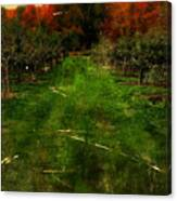 Into The Apple Orchard Canvas Print