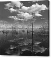 Into The Everglades Canvas Print