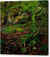 Into The Forest Of Fontainebleau Canvas Print