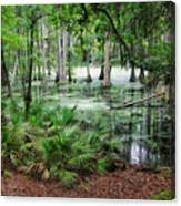 Into The Green Swamp Canvas Print
