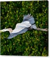 Into The Mangroves Canvas Print