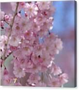 Into The Sakura - Japanese Cherry Blossom Canvas Print