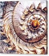 Into The Spiral Canvas Print