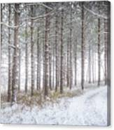 Into The Woods 3 - Winter At Retzer Nature Center  Canvas Print