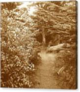Into The Woods Sepia Canvas Print