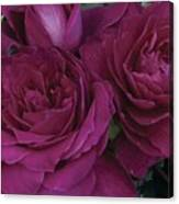Intrigue Rose Canvas Print