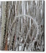 Intriguing Winter Frost Canvas Print