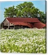 Poppy Invasion In Hillcountry-texas Canvas Print