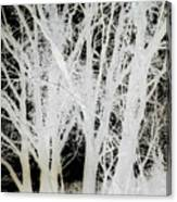 Inverted Nature Canvas Print