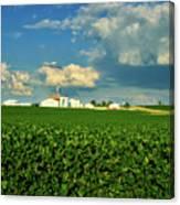 Iowa Soybean Farm Canvas Print