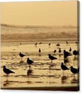 Iquique Chile Seagulls  Canvas Print