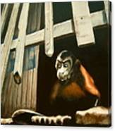Iquitos Monkey Canvas Print