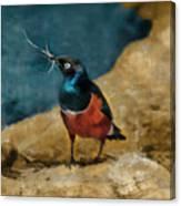 Iridescent Starling Canvas Print
