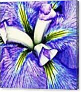 Iris 12 Canvas Print