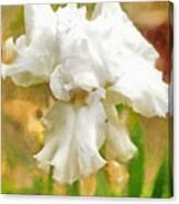 Iris 42 Canvas Print