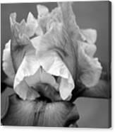 Iris 6622 H_4 Canvas Print