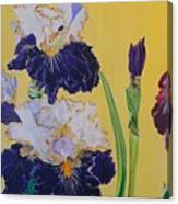 Iris Afternoon Delight Canvas Print