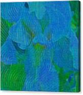 Iris Ageless Blossom  Canvas Print