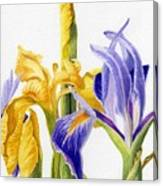 Iris And Flag Canvas Print