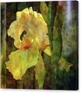 Iris And Post 6731 Idp_4 Canvas Print