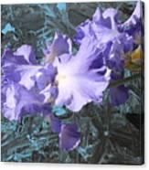 Iris Azulez Canvas Print