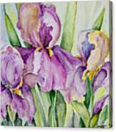 Iris Beauties Canvas Print