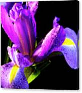 Iris Bloom One Canvas Print