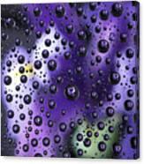 Iris Bubbles Canvas Print