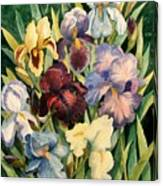 Iris Collection Canvas Print