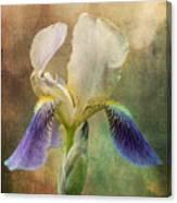 Iris Composite Canvas Print