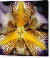 Iris Details Canvas Print
