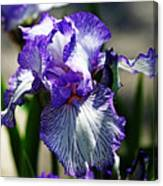 Iris Dressed For Royalty Canvas Print