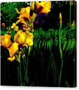 Iris Field In Abstract Canvas Print