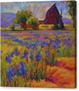 Iris Field Canvas Print