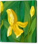 Iris Flow Canvas Print