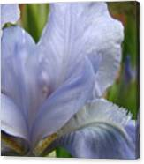 Iris Flower Blue 2 Irises Botanical Garden Art Prints Baslee Troutman Canvas Print