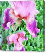 Iris Flower Photograph I Canvas Print