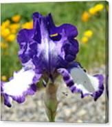 Iris Flower Purple White Irises Nature Landscape Giclee Art Prints Baslee Troutman Canvas Print