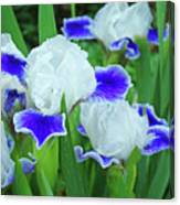 Iris Flowers Art Prints Blue White Irises Floral Baslee Troutman Canvas Print