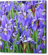 Iris Flowers Artwork Purple Irises 9 Botanical Garden Floral Art Baslee Troutman Canvas Print