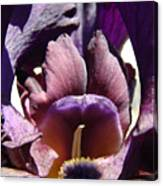 Iris Flowers Purple Irises Artwork Prints Framed Canvas Cards Nature Gardens Canvas Print