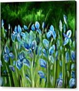 Iris Galore Canvas Print