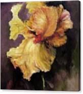 Iris Gold Canvas Print