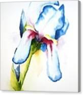 Iris II Canvas Print