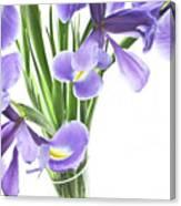 Iris In A Vase Canvas Print