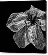 Iris In Black And White Canvas Print