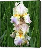 Iris In Grass Canvas Print