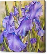 Iris in purple Canvas Print