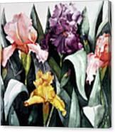 Iris Integration Canvas Print