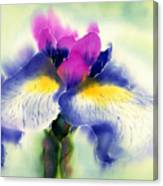 Iris Kaempheri Nikko Canvas Print